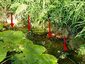 algenwachstum verhindern teichrand