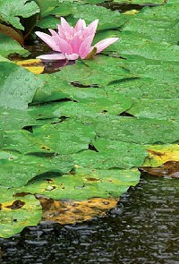 ph wert schwankungen regenwasser