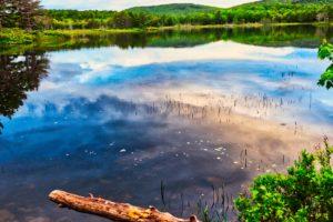 Schöner Teich bei uns ums Eck